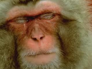 EM-monkey.jpg